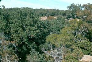 236236a cross timbers and barrens